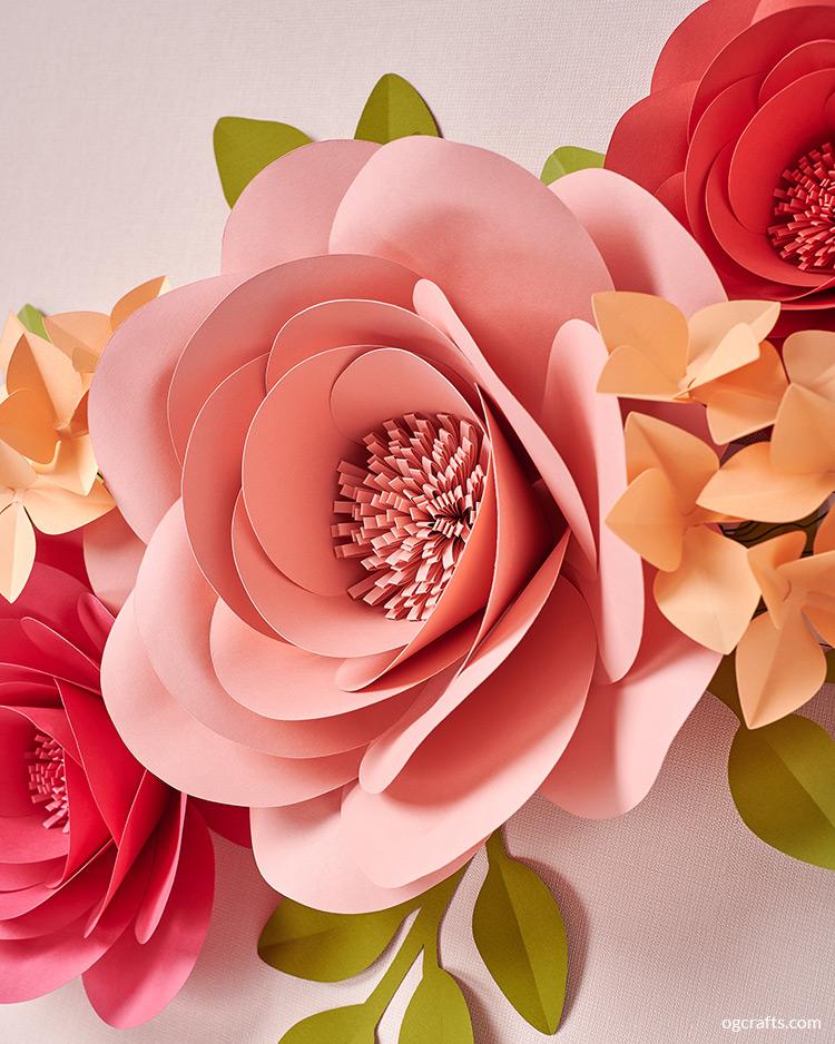 Giant Garden Roses